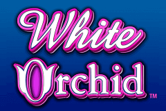 logo white orchid igt jeu casino